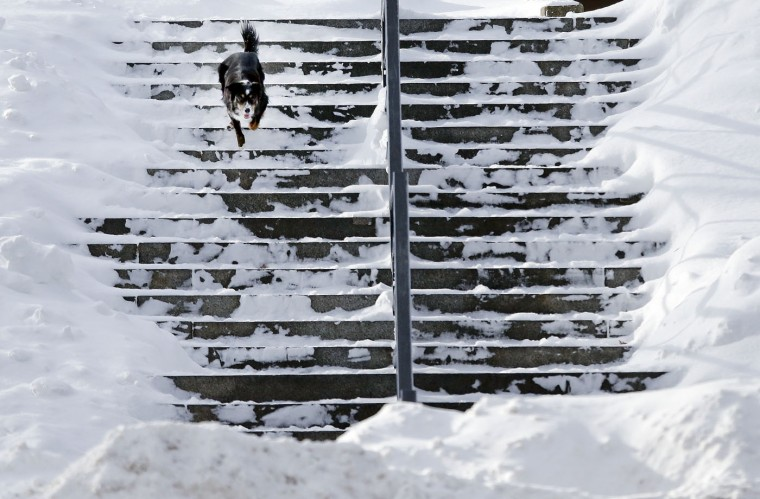 Vin, a Border Collie, finds some running room on the snowy steps of the Bunker Hill Monument in Boston's Charlestown section, Wednesday, Jan. 28, 2015, one day after a blizzard dumped about two feet of snow in the city. (AP Photo/Elise Amendola)