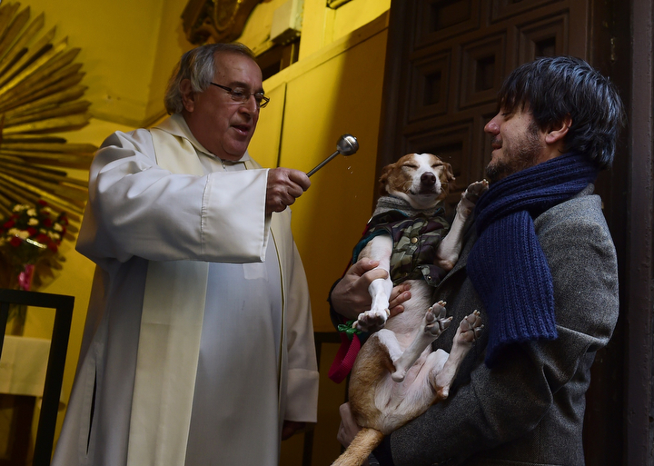 A dog is blessed by a priest at San Anton church in Madrid marking San Anton Abad's Day (Saint Anthony.) Dogs, cats, rabbits and even turtles, many dressed in their finest, trooped into churches across Spain in search of blessing on the patron saint of animals Saint Anthony's Day. (Pierre-Philippe Marcou/AFP-Getty Images)
