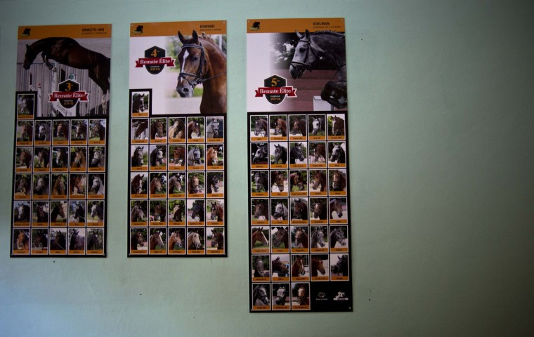 Posters of horses auctioned off in previous years hang at the National Equestrian Club in Lenin Park on the outskirts of Havana, Cuba. Cuba complains bitterly about training world-class athletes who leave to make millions for themselves in other countries. If successful, Cuba's new equine initiative to breed thoroughbred jumping horses would produce four-hooved performers whose success only means more revenue for the program that produces them. (AP Photo/Ramon Espinosa)