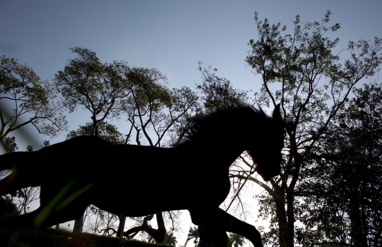 A horse trots on the state-run Azucarero horse ranch in Artemisa, Cuba. Starting in 2005, Cuba began to import young Dutch Warmbloods then train them for competitive jumping before selling them at age 3. (AP Photo/Ramon Espinosa)