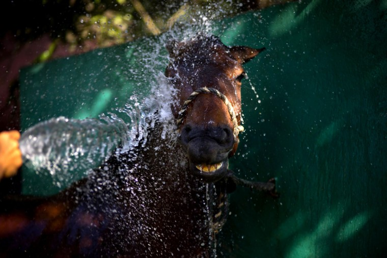 A worker sprays a horse with water after a training session at the state-run Azucarero horse ranch in Artemisa, Cuba. By importing colts and fillies from the Netherlands, Cuban trainers are creating prized competitors capable of fetching buyers at private auctions, with much of the proceeds going back to the government-led equine enterprise. (AP Photo/Ramon Espinosa)