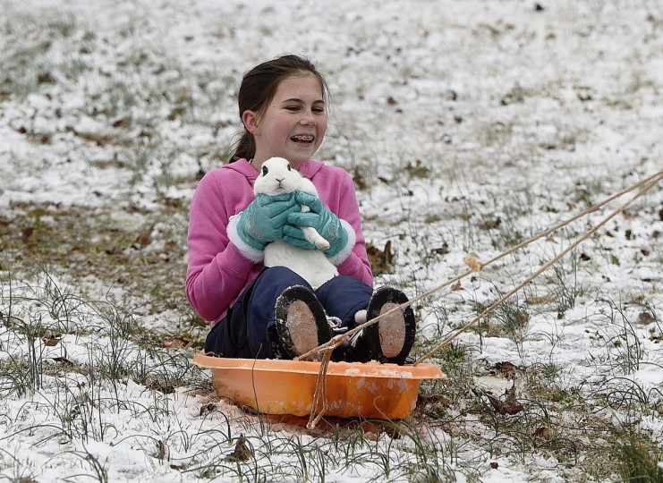"Elizabeth Carpenter, 11, slides down a snowy slope with her neighbor's pet rabbit ""Bell"", in the Huntington Forest neighborhood of Gastonia, N.C. Tuesday, Feb 24, 2015. Elizabeth is a 5th-grader at Gardner Park Elementary school and was enjoying her day off from school. Gaston County Schools were closed due to the snow. (AP Photo/The Charlotte Observer, Robert Lahser)"