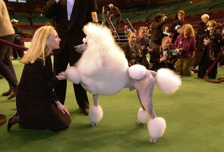 Ch Ale Kai Mikimoto On Fifth, a standard poodle raises a paw for owner Karen LeFrak after winning the non sporting group in the Westminster Kennel Club dog show Monday, Feb. 10, 2003, in New York. (AP Photo/Gregory Bull)