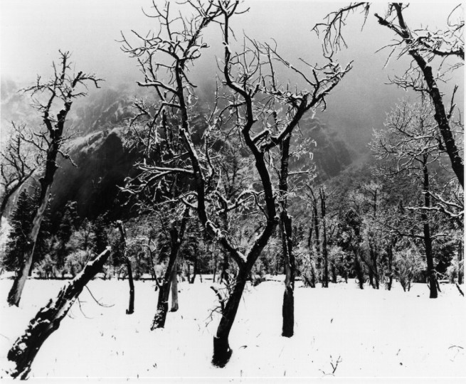 Winter, Yosemite Valley, Oaks in Mist (Ansel Adams)