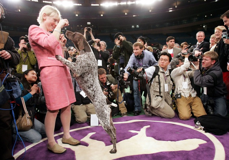 Carlee, a German Shorthaired Pointer, celebrates with handler Michelle Ostermiller after winning the Westminster Kennel Club Dog Show's Best In Show award at Madison Square Garden February 15, 2005 in New York City. (Photo by Mario Tama/Getty Images)
