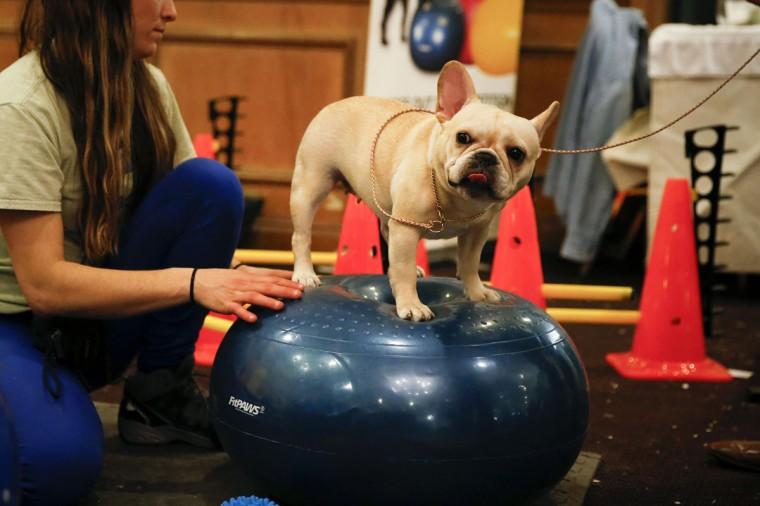 A dog exercises inside the Hotel Pennsylvania in New York, February 9, 2014. (Shannon Stapleton/Reuters)
