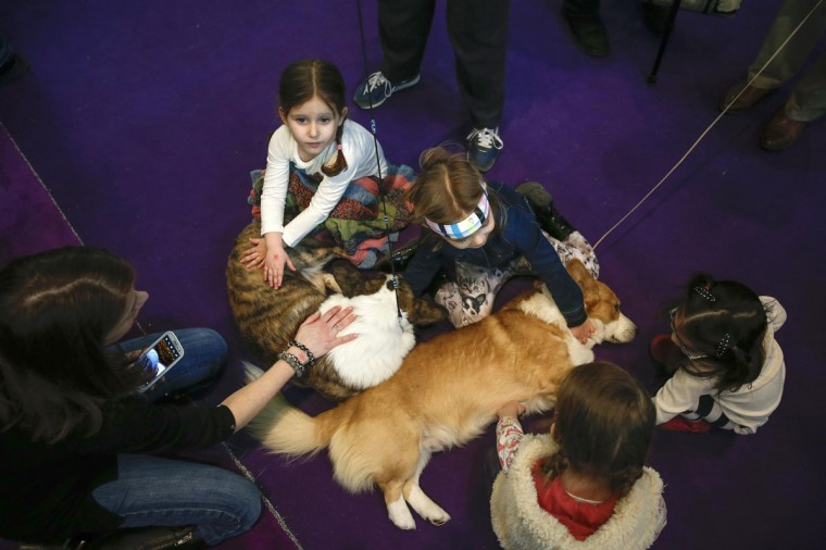 A woman and children pet dogs during day one of judging of the 2014 Westminster Kennel Club Dog Show in New York, February 10, 2014. (Shannon Stapleton/Reuters)