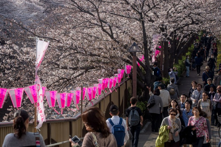 People walk under blooming cherry blossom trees on March 30, 2015 in Tokyo, Japan. The Cherry blossom season begins in Okinawa in January and moves north through Feburary peaking in Kyoto and Tokyo at the end of March and lasting just over a week. (Photo by Chris McGrath/Getty Images)