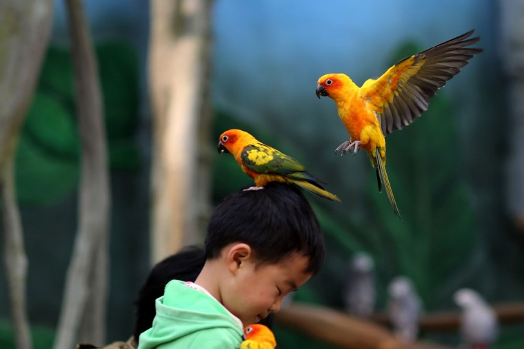 This picture taken on March 21, 2015 shows a parrot standing on the head of a child in the Kunming Zoo in Kunming, southwest China's Yunnan province. (AFP PHOTOSTR/AFP/Getty Images)