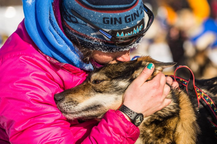 Zoya DeNure comforts her dog as veterinarian Michael Walker examines it at the Manley Hot Springs, Alaska, checkpoint during the Iditarod Trail Sled Dog Race on Tuesday, March 10, 2015. (AP Photo/Alaska Dispatch News, Loren Holmes)