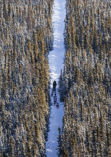 A musher follows a team of dogs through the forest between Nenana and Manley Hot Springs, Alaska, during the Iditarod Trail Sled Dog Race on Tuesday, March 10, 2015. (AP Photo/Alaska Dispatch News, Loren Holmes)