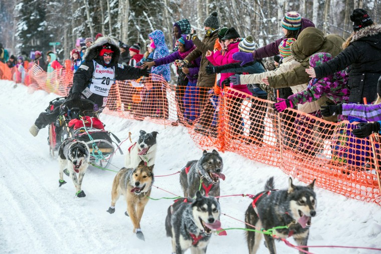 Musher Scott Janssen gives high-fives to race fans during the start of the Iditarod Trail Sled Dog Race, Monday, March 9, 2015, in Fairbanks, Alaska. Iditarod mushers began their 1,000-mile trek across Alaska along a new route Monday after poor trail conditions forced organizers to push the race's start north, bypassing a mountain range. (AP Photo/Alaska Dispatch News, Loren Holmes)