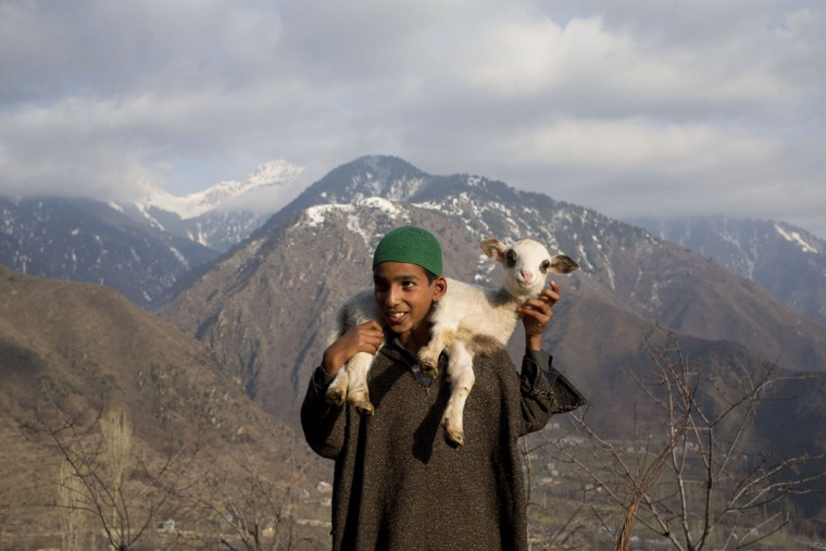 Ahmed, a young Kashmiri shepherd boy carries a lamb on his back in Astanpora, some 25 Kilometers from Srinagar, Indian controlled Kashmir, Wednesday, March 25, 2015. Sheep rearing is popular in the state of Jammu and Kashmir. With its sufficient pasture lands, the state also has a Sheep husbandry department with the main objective of promoting sheep and goat development in the state. (AP Photo/Dar Yasin)