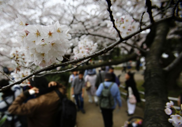 People walk under the blooming cherry blossoms near the Chidorigafuchi Imperial Palace moat in Tokyo, Sunday, March 29, 2015. (AP Photo/Shizuo Kambayashi)