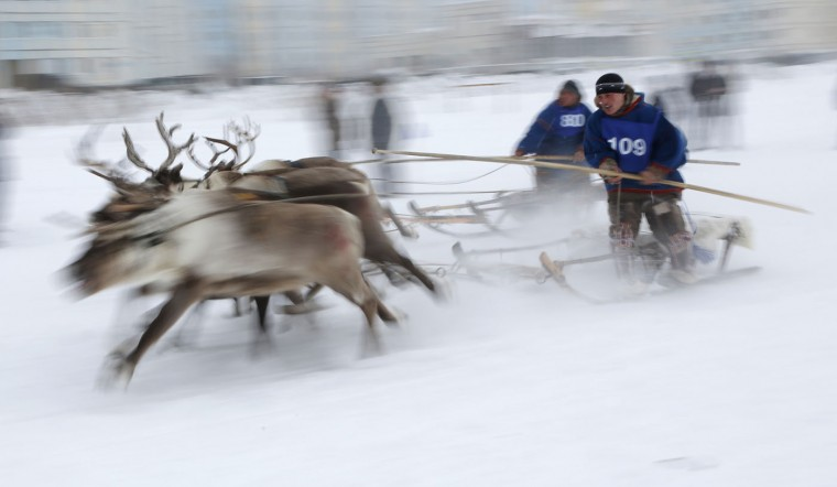 In this photo taken on Sunday, March 15, 2015, Nenets men compete in a reindeer race at the Reindeer Herder's Day in the city of Nadym, in Yamal-Nenets Region, 2500 kilometers (about 1553 miles) northeast of Moscow, Russia. For the indigenous nomadic Nenets people, the Reindeer Herderís Day offers a chance to show their prowess in wrestling, high jumps and other traditional local sports, but, above all, reindeer races. (AP Photo/Dmitry Lovetsky)
