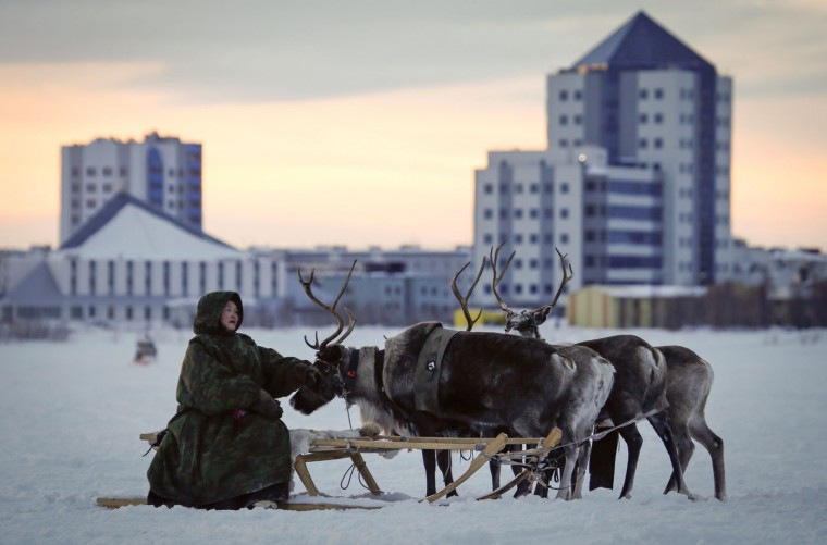 In this photo taken on Saturday, March 14, 2015, a Nenets man sits on a reindeer sleigh at the Reindeer Herder's Day holiday in the city of Nadym, in Yamal-Nenets Region, 2500 kilometers (about 1553 miles) northeast of Moscow, Russia. Some participants at the Reindeer Herder's Day travel hundreds of kilometers across the frozen tundra to attend the competition in the region in northern Siberia, more than half of the territory of which lies above the Arctic Circle. (AP Photo/Dmitry Lovetsky)