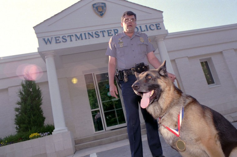 """Sgt. Steve Shatzer and his K-9 """"Ryn"""" together in front of the Westminster City Police Station. Ryn and Sgt. Shatzer answered a burglary call and Ryn was hit over the head with a pipe. (Michelle Gienow/Baltimore Sun, 1995)"""