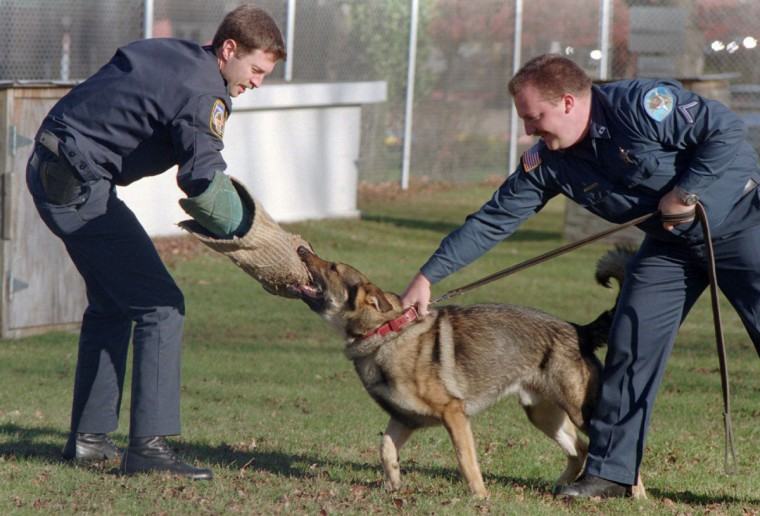 """K-9 officers Dave Garner (L) acts as a suspect as officer Don Hindenlang (with the Harford County Sheriffs Dept.) and his dog """"Bir"""" train searching and holding. (Mark Bugnaski/Baltimore Sun, 1994)"""