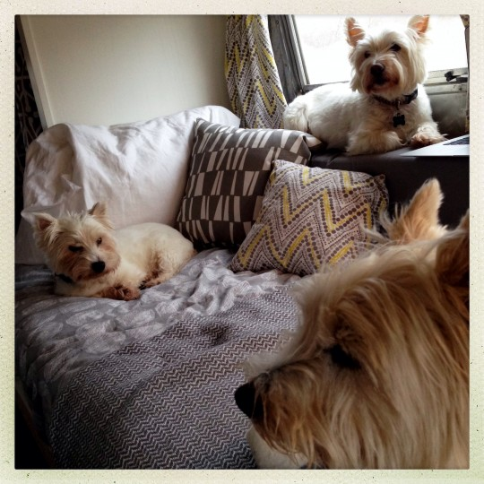 """The three dogs relaxing inside """"Ethel"""" while camping in Shenandoah River State Park. Cooper (back of cushion,) Chester (front) and Chloe. The three are natural travelers, and adapted easily to the Airstream lifestyle. (Christopher T. Assaf/Baltimore Sun)"""