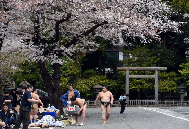 """Sumo wrestlers prepare for a sumo exhibition underneath cherry blossom trees at the Yasukuni shrine in Tokyo on April 3, 2015. Sumo wrestlers took part in a """"honozumo"""", a ceremonial one-day exhibition for hundreds of spectators held within the shrine's precincts. (Toshifumi Kitamura/AFP/Getty Images)"""