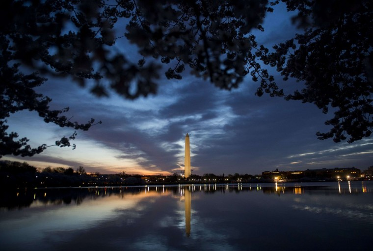 Cherry trees blossom around the Tidal Basin near the Washington Monument at sunrise on the National Mall in Washington, DC, April 11, 2015. The cherry blossoms, originally a gift from Japan, reached their peak bloom yesterday. (Saul Loeb/AFP/Getty Images)