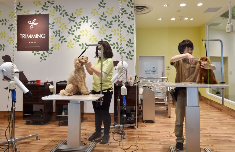 This picture taken on April 17, 2015 shows staff members of Aeon Pet Pecos grooming dogs in a trimming room. Aeon Pet, a subsidiary of the Aeon supermarket chain, has opened last year the dog nursing home with full-time care at a shopping mall in Chiba, east of Tokyo, providing a gym, a swimming pool, and some stay spaces in accordance with the size of the dog. (Kazuhiro Nogi/AFP/Getty Images)