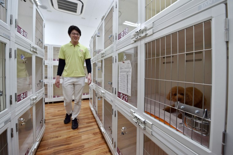 This picture taken on April 17, 2015 shows a staff member of the Japanese pet company Aeon Pet Pecos checking on dogs in kennel spaces. Aeon Pet, a subsidiary of the Aeon supermarket chain, has opened last year the dog nursing home with full-time care at a shopping mall in Chiba, east of Tokyo, providing a gym, a swimming pool, and some stay spaces in accordance with the size of the dog. (Kazuhiro Nogi/AFP/Getty Images)