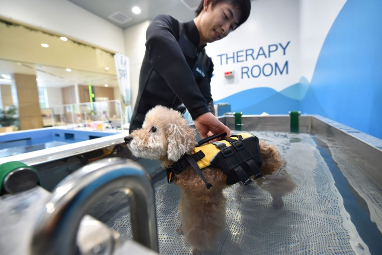 This picture taken on April 17, 2015 shows a staff member of the Japanese pet company Aeon Pet Pecos giving a dog a life jacket in a small pool. (Kazuhiro Nogi/AFP/Getty Images)