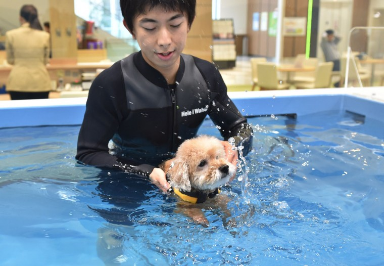 This picture taken on April 17, 2015 shows a staff member of the Japanese pet company Aeon Pet Pecos helping a dog to swim in a pool. (Kazuhiro Nogi/AFP/Getty Images)