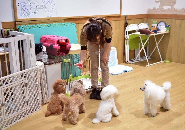 This picture taken on April 17, 2015 shows a staff member of Aeon Pet Pecos teaching discipline to dogs in a training room. (Kazuhiro Nogi/AFP/Getty Images)