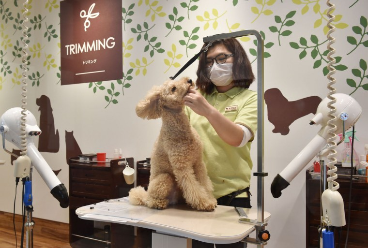 This picture taken on April 17, 2015 shows a staff member of Aeon Pet Pecos grooming a dog at a trimming room in a shopping mall in Chiba, east of Tokyo. (Kazuhiro Nogi/AFP/Getty Images)