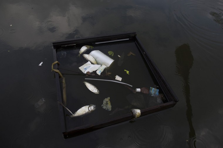 In this Feb. 28, 2015 photo, dead fish and trash float inside a discarded drawer in Guanabara Bay in Rio de Janeiro, Brazil. Rio state authorities say theyíre working to make good on an Olympic pledge to cut the bayís pollution by 80 percent, but local fishermen who see the water up close day after day say theyíve witnessed little improvement. (AP Photo/Leo Correa)