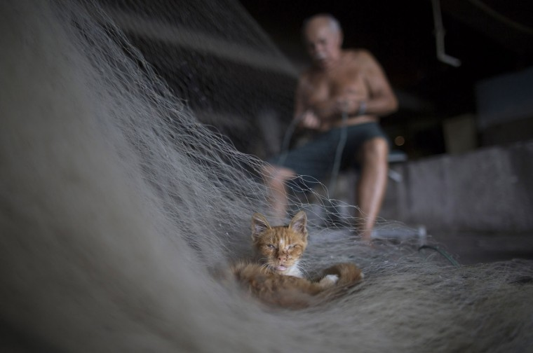 In this Feb. 28, 2015 photo, a street cat that survives on fish scraps nestles on a net being repaired by Manuel Batista de Moraes at the dock in the Vila Pinheiro slum, part of the Mare complex in Rio de Janeiro, Brazil. The 76-year-old fisherman no longer goes out on the water and makes his living mending fishing nets. Itís a constant task, he said, because the trash that fishermen encounter rips the nets apart. (AP Photo/Leo Correa)