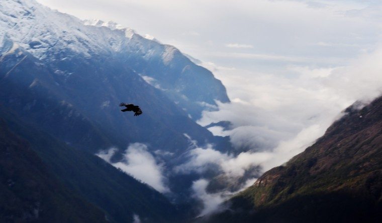 A Red Billed Chough flies over the mountain side near the north-eastern Nepalese town of Shyangboche as a bank of clouds creeps up the Dudh Koshi river basin. Trekkers and climbers heading towards the Peaks and glaciers deep in the Khumbu region, including Mount Everest follow this valley as they head north. (Roberto Schmidt/AFP-Getty Images)
