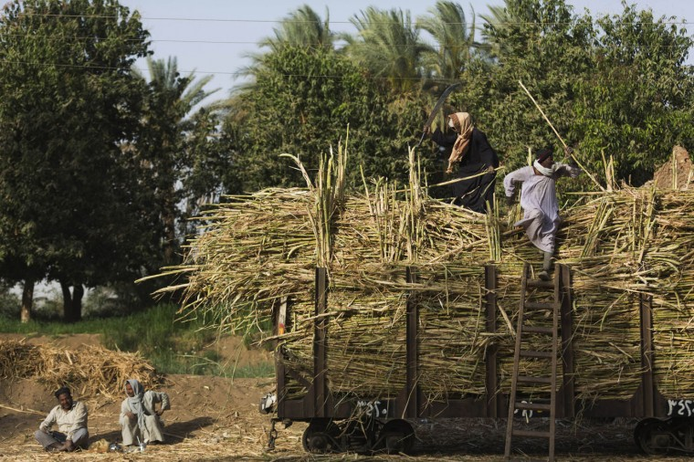 """In this Sunday, April 12, 2015 photo, workers take a tea break as other villagers load sugarcane on a rail car, in Abu al-Nasr, about 770 kilometers (480 miles) south of Cairo. Salama Osman, who works as a doorman in Cairo, is on one of his two trips a year back home to Abu al-Nasr. """"There are no jobs"""" here, Salama said of his village home, where most rely on farming to make a living. """"There is not much money in (harvesting) sugarcanes."""" (AP Photo/Hiro Komae)"""