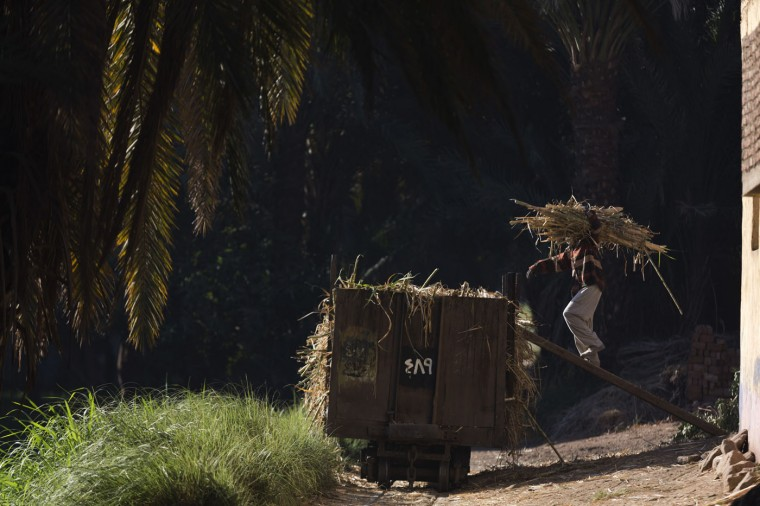 """In this April 14, 2015 photo, a man loads sugarcane onto a rail car in Abu al-Nasr, about 770 kilometers (480 miles) south of Cairo. Salama Osmanís day begins before the tenants of his Cairo apartment building wake and ends only after the last returns home at night, a work week without weekends. Except this week as he is on one of his two trips a year back home. """"There are no jobs"""" here in Abu al-Nasr, Salama said of his village home, where most rely on farming to make a living. """"There is not much money in (harvesting) sugarcanes."""" (AP Photo/Hiro Komae)"""
