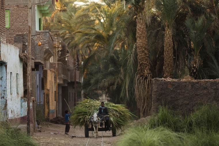 """In this Wednesday, April 15, 2015 photo, a man carries sugarcane on a donkey cart, in Abu al-Nasr village, about 770 kilometers (480 miles) south of Cairo, Egypt. Salama Osmanís day begins before the tenants of his Cairo apartment building wake and ends only after the last returns home at night, a work week without weekends. Except this week as he is on one of his two trips a year back home. """"There are no jobs"""" here, Salama said of his village home, where most rely on farming to make a living. """"There is not much money in (harvesting) sugarcanes."""" (AP Photo/Hiro Komae)"""