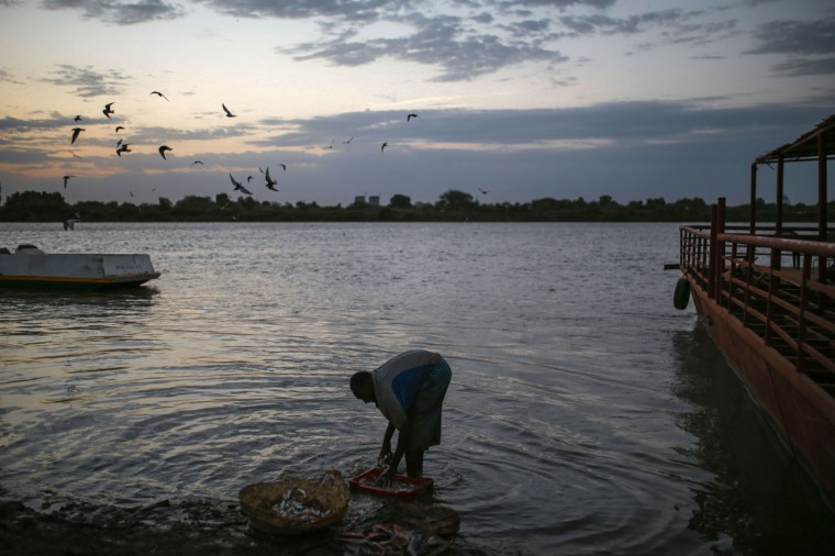 In this Thursday, April 16, 2015 photo, a Sudanese fisherman washes his day's catch in the early morning hours by the Nile River bank, in Omdurman, Khartoum, Sudan. (AP Photo/Mosa'ab Elshamy)