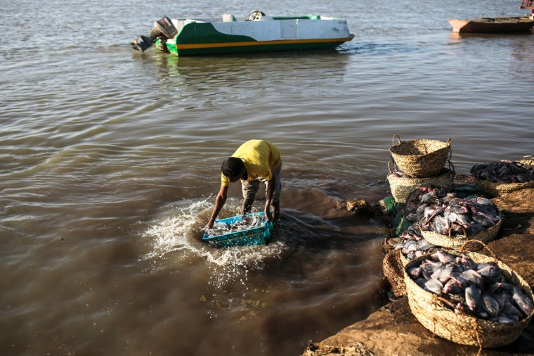 In this Thursday, April 16, 2015 photo, Sudanese fisherman wash their day's catch in the early morning hours by the Nile River bank, in Omdurman, Khartoum, Sudan. (AP Photo/Mosa'ab Elshamy)