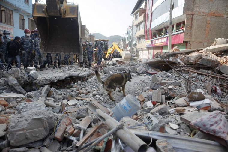 A USAID rescue team sniffer dog works to find survivors at the site of a building that collapsed in an earthquake in Kathmandu, Nepal, Tuesday, May 12, 2015. A major earthquake has hit Nepal near the Chinese border between the capital of Kathmandu and Mount Everest less than three weeks after the country was devastated by a quake. (AP Photo/Niranjan Shrestha)