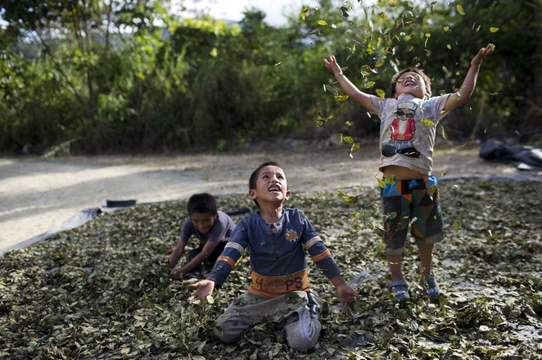 "In this March 13, 2015 photo, Yohan, 4, from left, Cristian, 7, and Angelo, 6, playfully toss coca leaves into the air, singing: ""I have a lot of money, look at all the money I have,"" in La Mar, province of Ayacucho, Peru. Hauling cocaine out of the remote valley is about the only way to earn decent cash in this region where a farmhand earns less than $10 a day. Beyond extinguishing young lives, the practice has packed Peruís highland prisons with cocaine backpackers while their bosses evade incarceration. (AP Photo/Rodrigo Abd)"