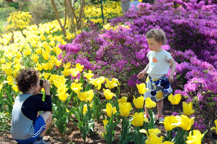 Finley Manekin, 5, left, takes a picture of his cousin, Kluane Beill, 2 1/2, among the flowers in bloom at Sherwood Gardens. (Algerina Perna/Baltimore Sun)