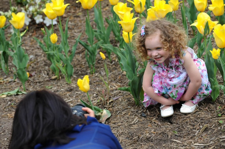 Alexa Lyons, 3, gets her picture taken by photographer Jessica Carr amid the tulips at Sherwood Gardens. (Algerina Perna/Baltimore Sun)