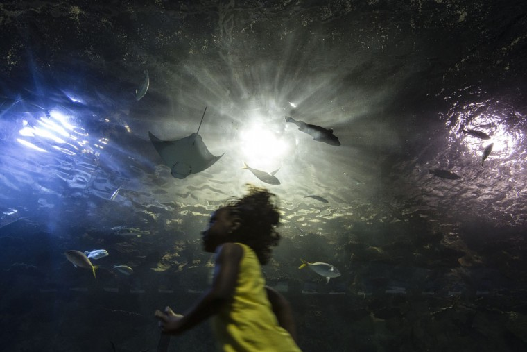 Kiana Yonga, of Cincinnati, runs through a submerged viewing tunnel as fish pass overhead at the Newport Aquarium, Monday, May 4, 2015, in Newport, Ky. (AP Photo/John Minchillo)