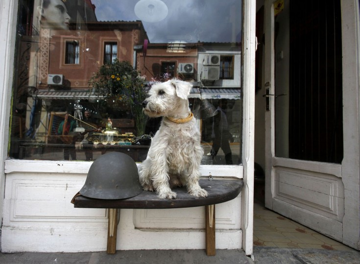 A dog sits by a WWII helmet, outside an antique and souvenir store in the Old Bazaar in Skopje, Macedonia, Thursday, May 28, 2015. (AP Photo/Boris Grdanoski)