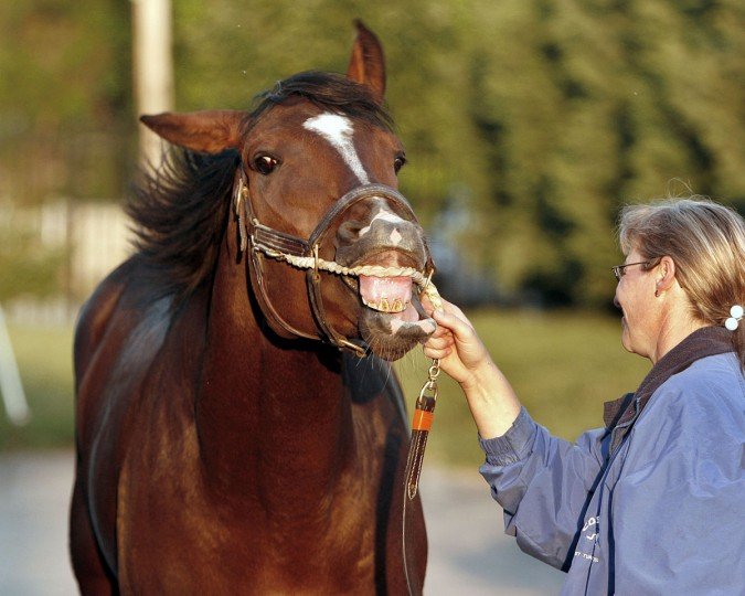 Mint Slewlep, the only horse currently stabled in the Preakness Stakes barn at Pimlico Race Course in Baltimore, Md., reacts as he gets his picture taken Tuesday, May 15, 2007. Holding the Preakness Stakes hopeful is Wilhelmia Moehrieg. (AP Photo/Garry Jones)