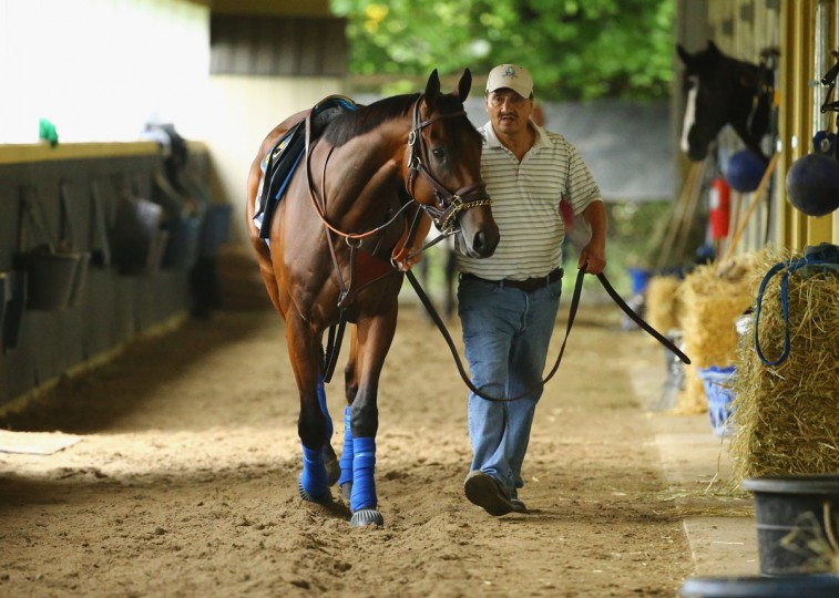 American Pharoah is walked in his barn prior to training at Belmont Park on June 3, 2015 in Elmont, New York. (Photo by Al Bello/Getty Images)