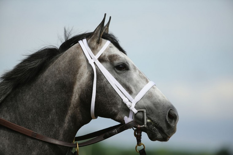 Frosted looks on during training at Belmont Park on June 3, 2015 in Elmont, New York. (Photo by Al Bello/Getty Images)