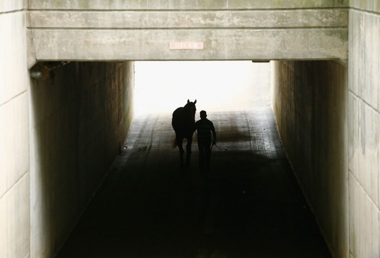 A horse walks through a tunnel at Belmont Park on June 4, 2015 in Elmont, New York. (Photo by Al Bello/Getty Images)