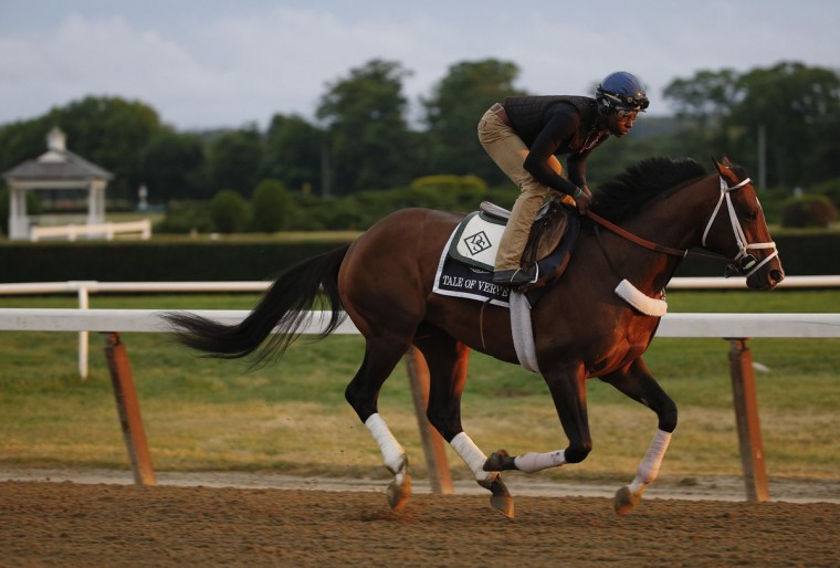 Tale of Verve gallops around the main track at Belmont Park, Thursday, June 4, 2015, in Elmont, N.Y. Tale of Verve is entered in Saturday's 147th running of the Belmont Stakes horse race, when American Pharoah will try for a Triple Crown. (AP Photo/Julie Jacobson)
